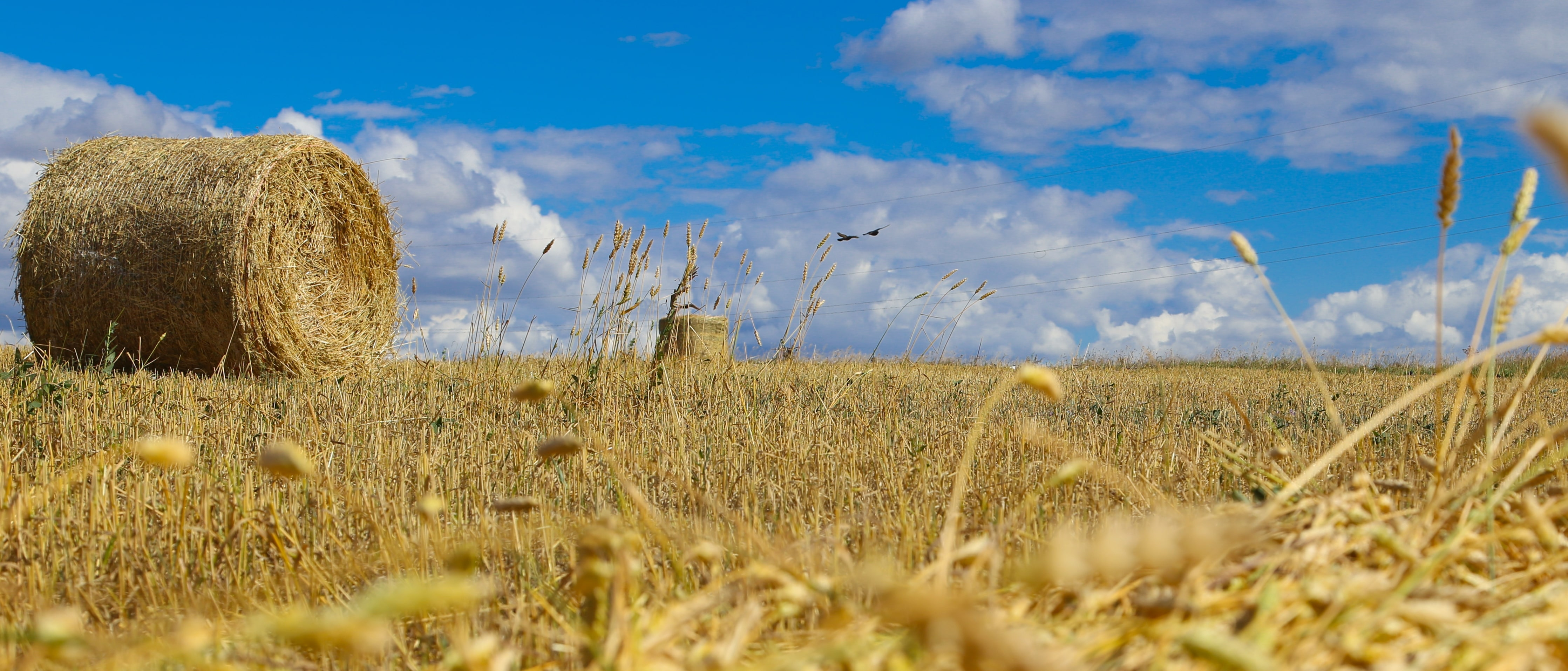 Agriculture of Kazakhstan is an ultramodern combine, standing idle in the field