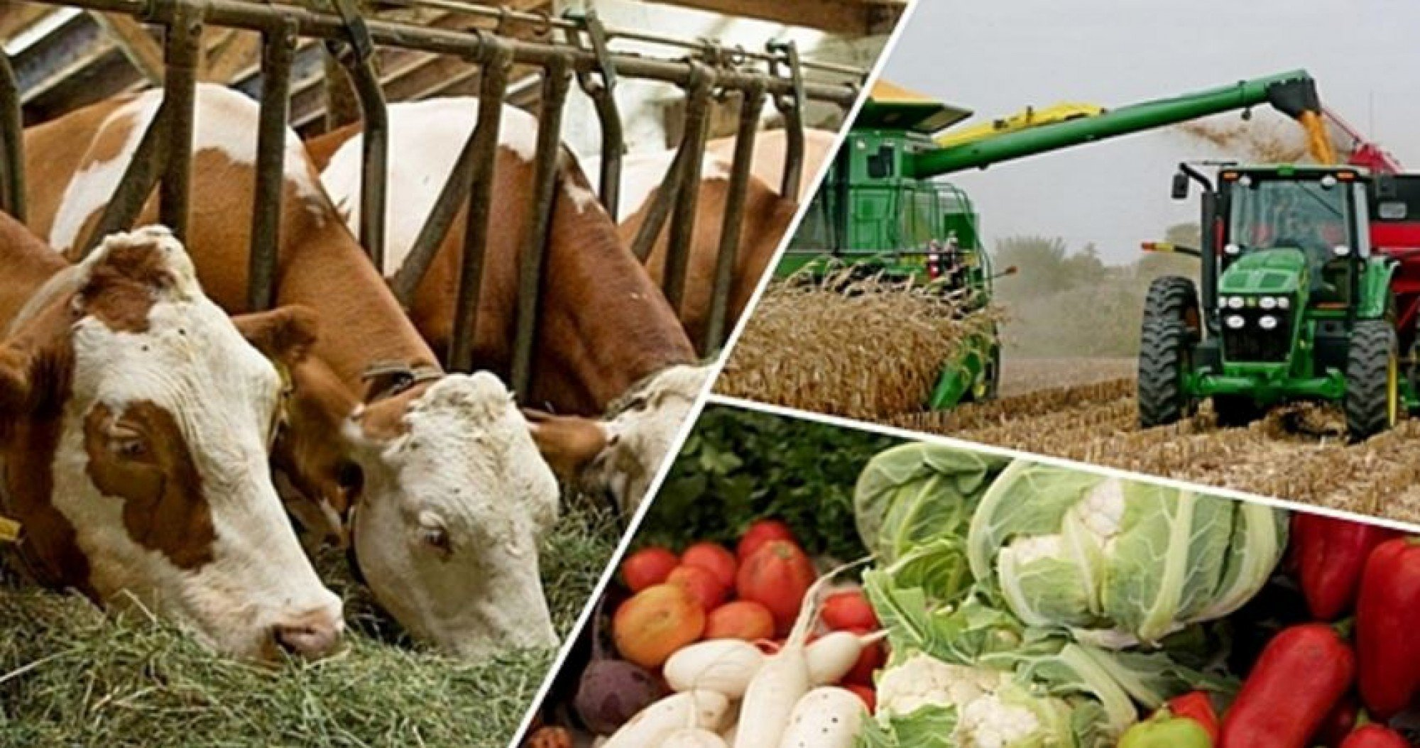 How Kazakhstan can increase agricultural income by $6 billion?