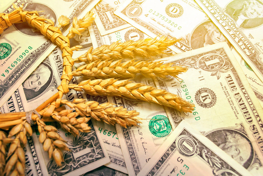 Prices for grain and oilseeds in Kazakhstan and at export crossings