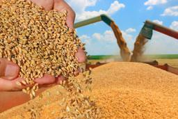 Results of harvesting of grain crops in Kazakhstan have been concluded
