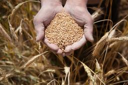 Kazakhstan grain is in high demand